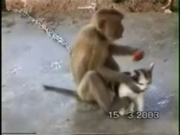 Monkey With A Pet Cat
